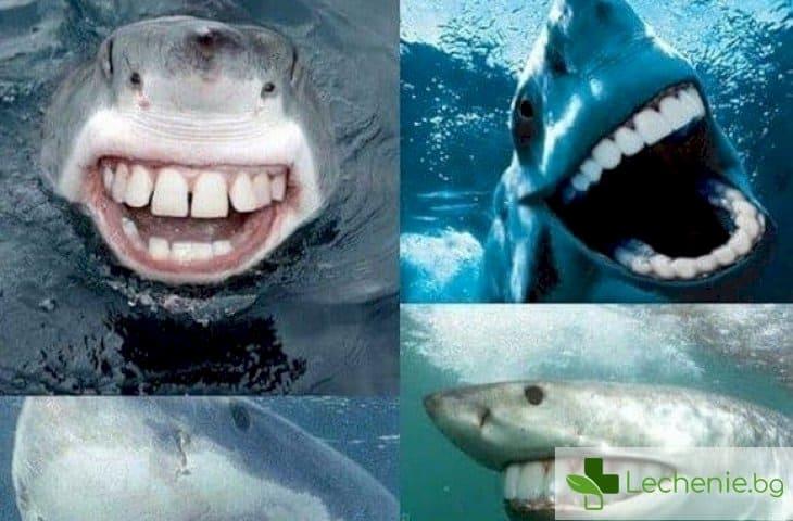 Като на акулите - зъбите на човека могат да се регенерират за 24 часа