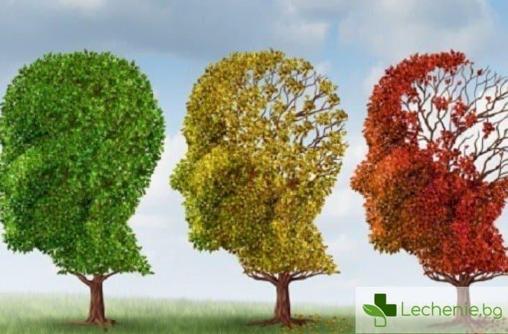 Пробив в лечението на Алцхаймер - неинвазивен метод с ултразвук възстановява паметта при мишки
