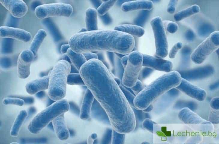 Защо страхът от бактерии е напълно безпочвен
