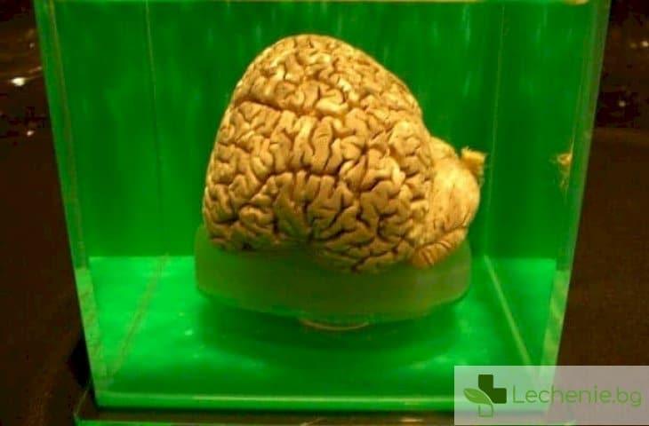 На крачка от безсмъртието - съживиха мозък, замразен на -130 градуса