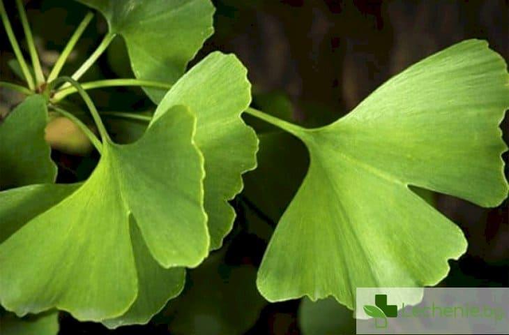 Тези 5 билки помагат на паметта да укрепне