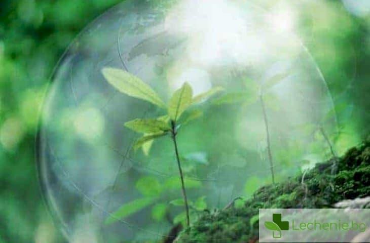 Как да изберете екологична битова химия