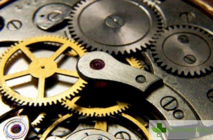 Генетичен механизъм - ето как работи вътрешният ни часовник