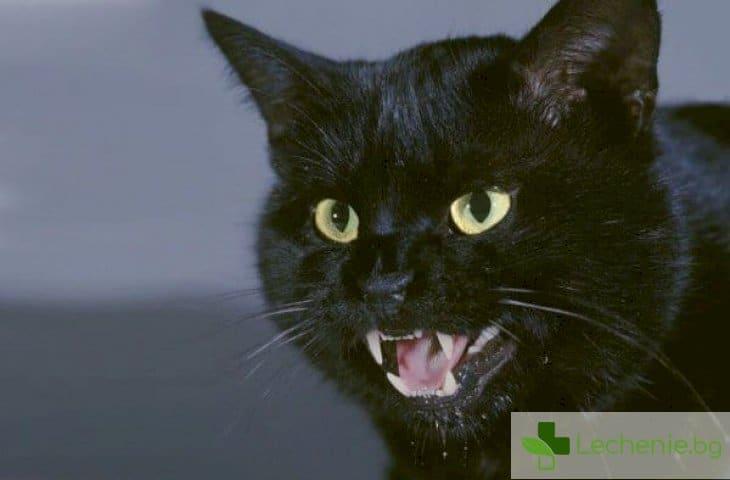 Черната котка - защо суеверията са били, са и ще бъдат