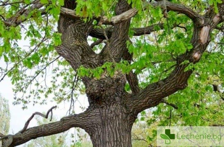 Катеренето по дърветата е полезно за паметта