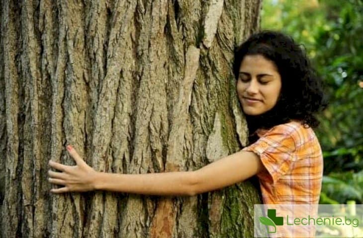 Дендротерапия - как дърветата могат да ви излекуват