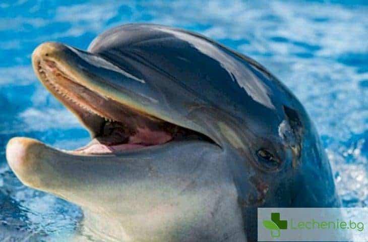 Делфините - цинични убийци и изнасилвачи с маска на мили създания