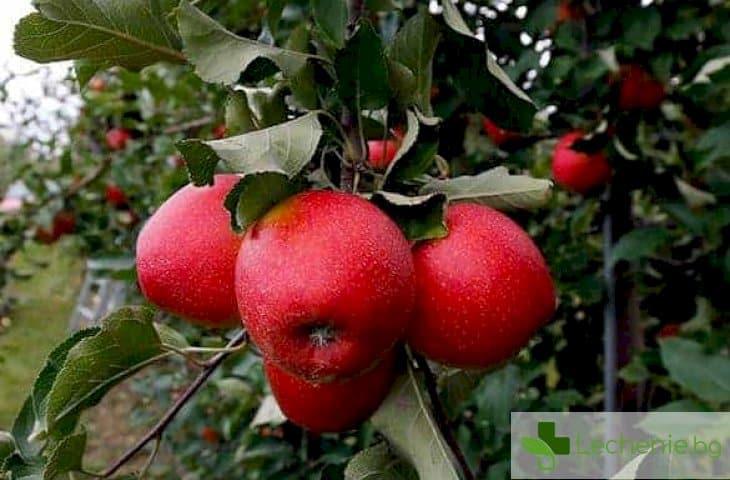 Ябълкова диета - ще ви промени до неузнаваемост