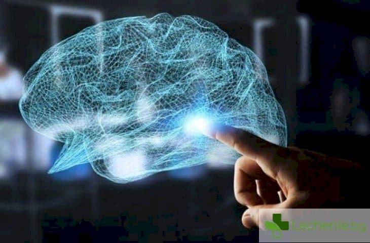 """""""Аутопсия"""" на мозъка - допинг за интелект разделя хората на богове и глупаци"""