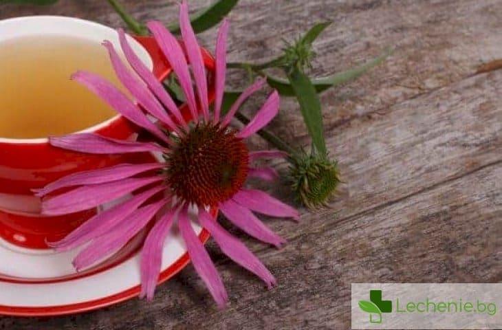 Лечебните свойства на ехинацеята, за които сте длъжни да знаете