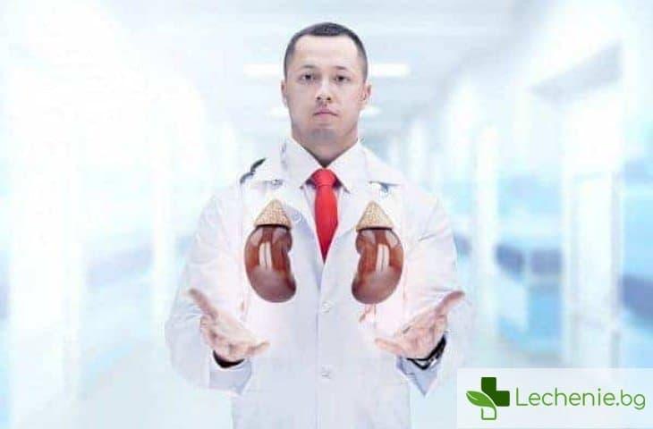 Изкуствен бъбрек - от хемодиализа до бъбрек от епруветка
