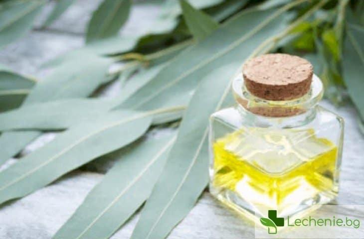 Етерично масло от евкалипт - топ 5 лечебни свойства