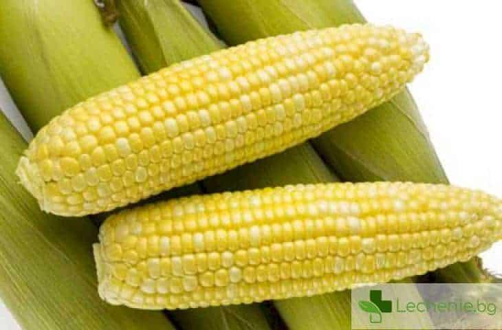 Какво е необходимо да знаем за ГМО