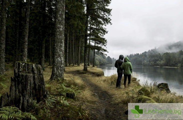Екотерапия - разходка в гората вместо откровения в леглото
