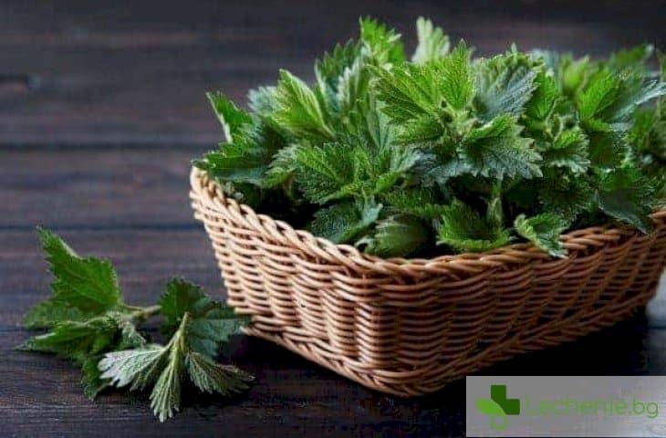 Първите пролетни билки - ценен хранителен източник
