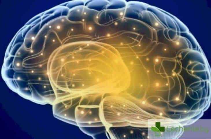 Ето как прекомерната импулсивност съсипва мозъка