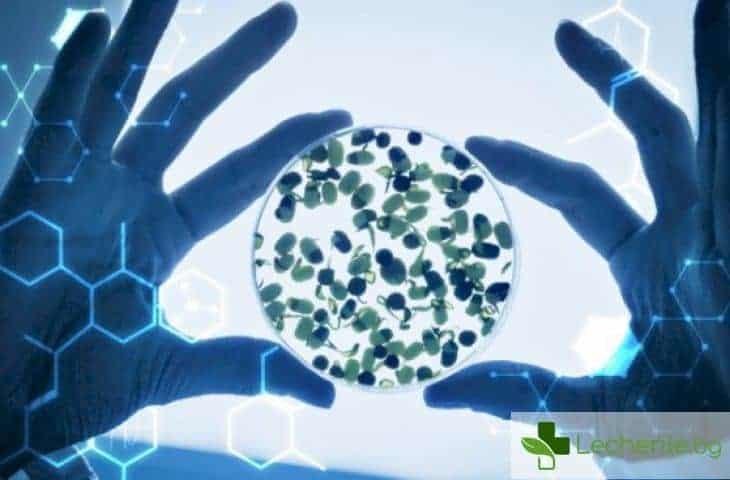 Генетичните изследвания - новата здравна мода