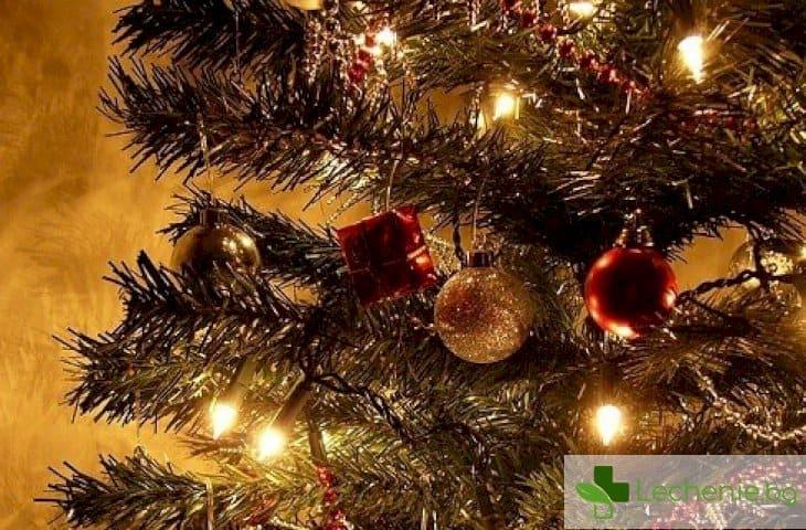 Как да изберем безопасна за здравето коледна елха?