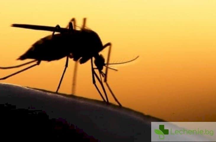 8 средства срещу комари - какво е ефективно и кое безполезно