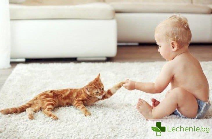 Малко дете и котка у дома - 5 правила за безопасност