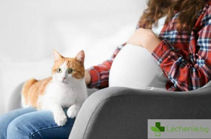 Защо за бъдещите майки е категорично забранено да галят котки