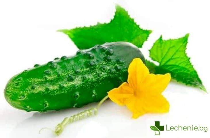 Опасни ли са горчивите краставици за здравето