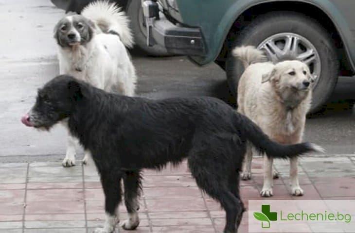 Как да се защитите от нападение на бездомни кучета