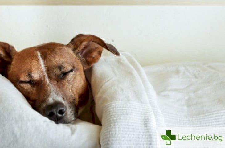 Гъбички, бактерии, животински косми - ето я мръсната истина за вашето легло