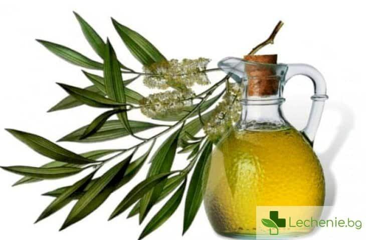 Масло от чаено дърво - 15 полезни свойства