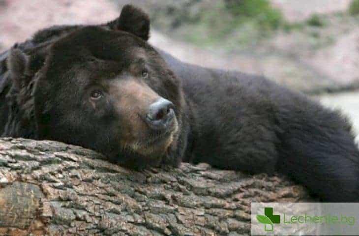 Защо хората не могат да спят цяла зима като мечките