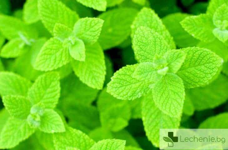 Подобрява ли ежедневното пиене на ментов чай здравословното състояние?