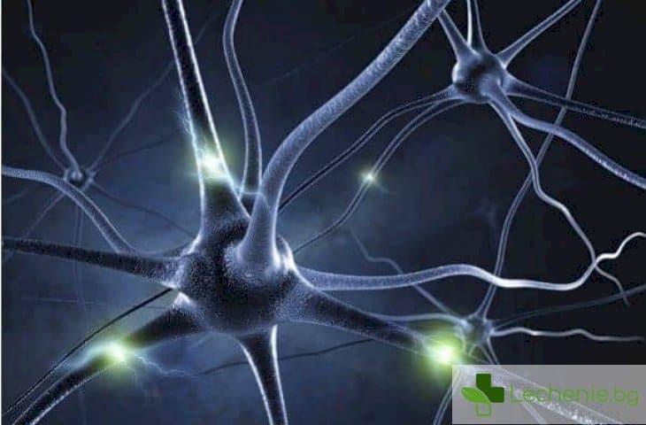 Мозъчен ензим пази от Алцхаймер, Паркинсон и от оглупяване на стари години