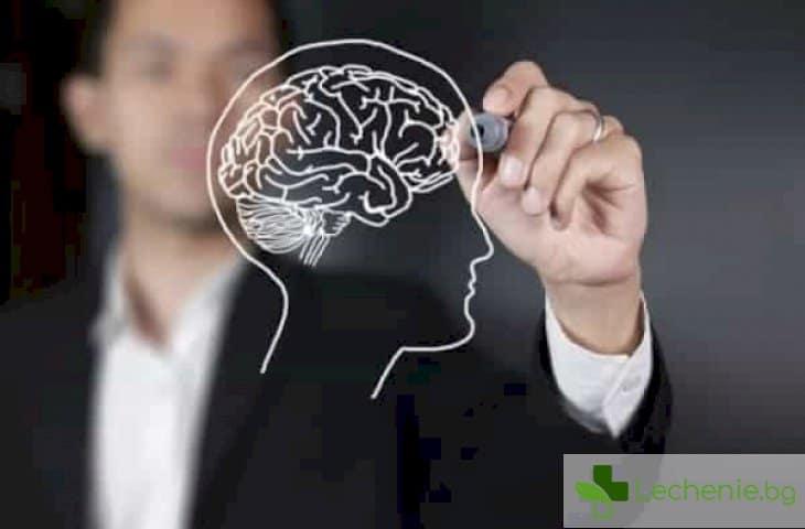Живият суперкомпютър - защо мозъкът е много по-активен нощем