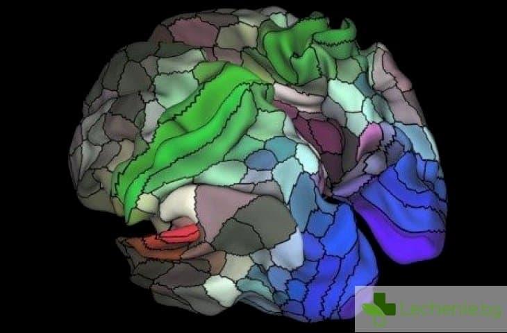 Детайлна карта разкрива почти 100 неизвестни зони в мозъка