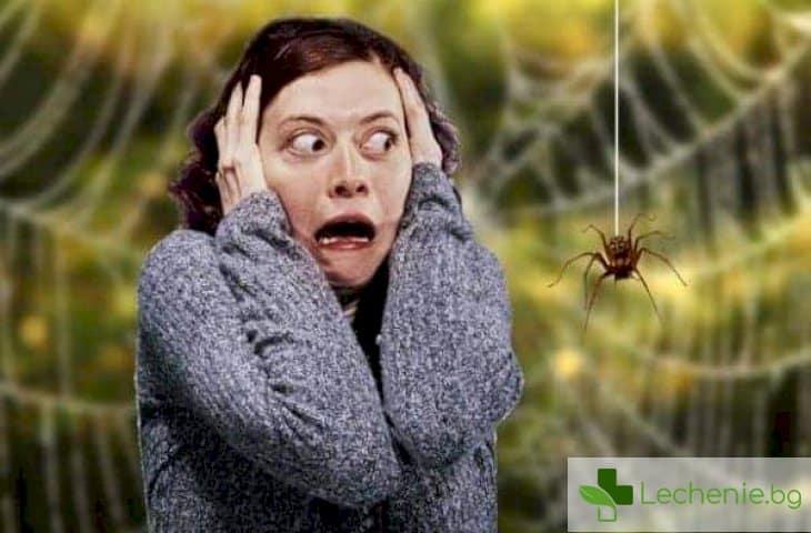 Инсектофобия - страх от насекоми