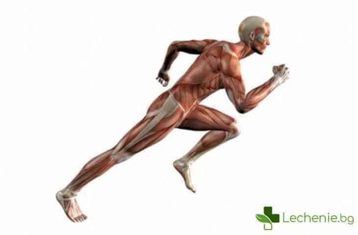 Как тялото реагира на физическо натоварване