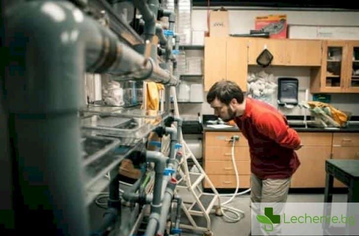 Как човешкия организъм може да бъде принуден да регенерира органите си