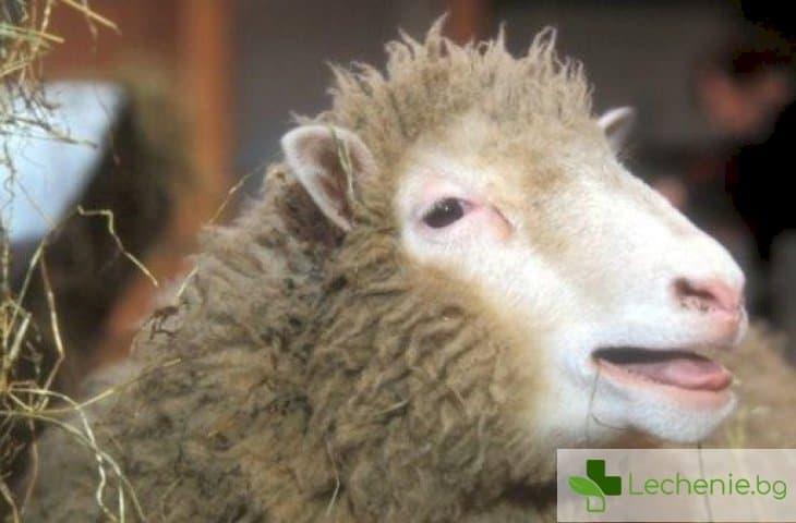 20 години от клонирането на овцата Доли - оправдаха ли се прогнозите