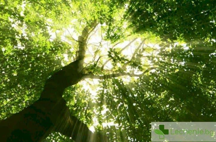 Зелените площи в градовете са необходими за справянето със стреса