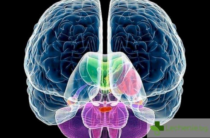 4 начина как да развиете дясното полукълбо на своя мозък
