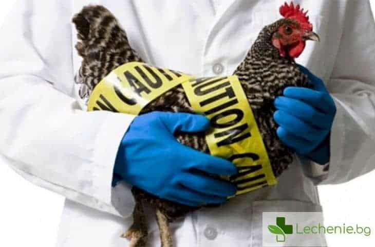 Птичият грип се завръща мистериозно