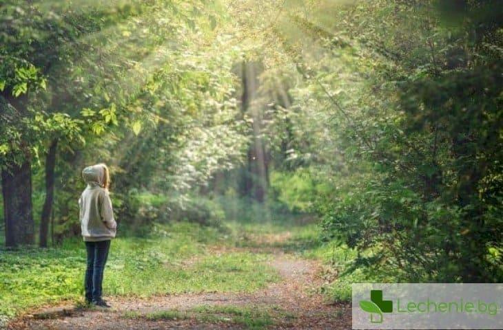 Орнитотерапия - какво лекуват песните на птиците