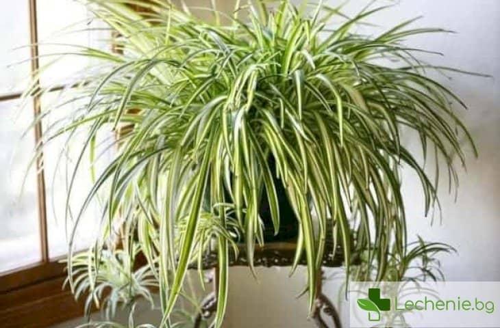 7 стайни растения, които пречистват отлично въздуха и никога не умират