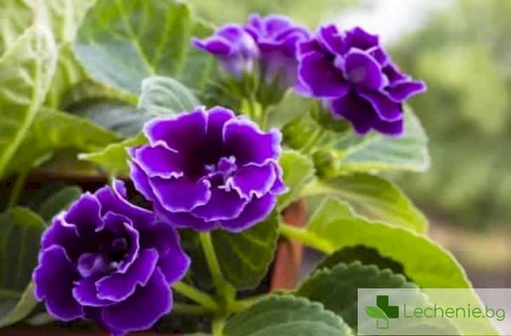 Топ 5 стайни растения, произвеждащи най-много кислород