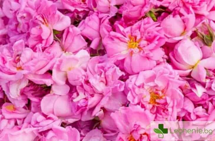 Грижа за лице и тяло - какво е розова вода и как да я използвате