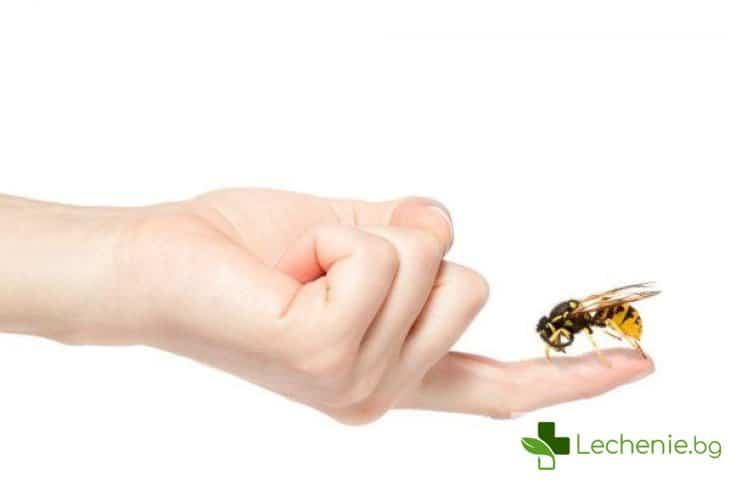 Ухапвания от кърлежи, пчели, оси, стършели при деца - риск от инфекции и алергия