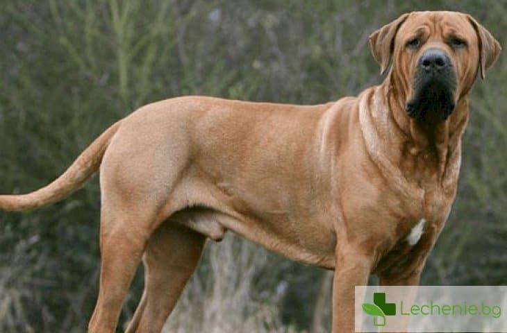 Топ 25 породи кучета най-голяма заплаха за здравето на човека