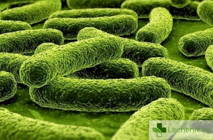 Как туберкулозната бактерия се укрива от имунната система на човека