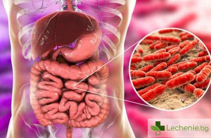 Възпаление на тънкото черво: ентерит - защо възниква