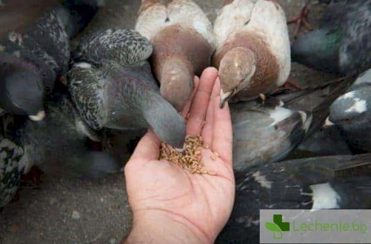 Топ 3 опасни заболявания, с които гълъбите могат да ни заразят